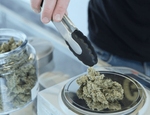 Your Guide to Cannabis Strains: Which One Is Right for Me?